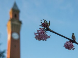 Spring is pointing to Old Joe Clock Tower